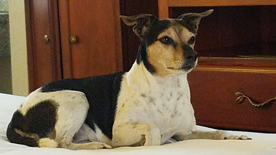Little Denmark's Benedicte The Pioneer (Cheyenne) bor I San Diego, Californien