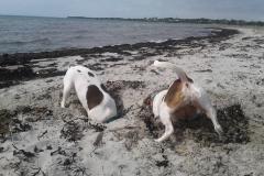 Ida og Sussi graver