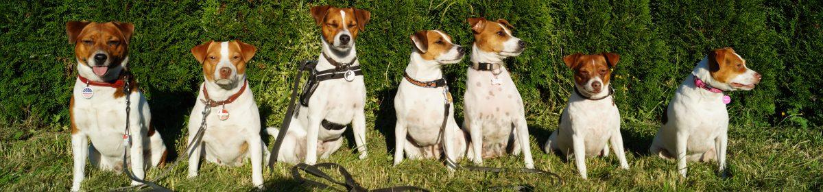 Kennel Little Denmark – Dansk/svensk gårdhund